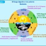 El reloj biológico